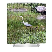 Very Hungry Blue Heron Shower Curtain