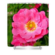 Very Pink Rose Shower Curtain