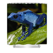 Very Tiny Blue Poison Dart Frog Shower Curtain
