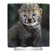 Very Young Cheetah Cub Maasai Mara Shower Curtain by Suzi Eszterhas