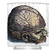 Vesalius: Cranium Shower Curtain