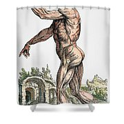 Vesalius: Muscles 02, 1543 Shower Curtain