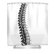 Vesalius: Spine, 1543 Shower Curtain