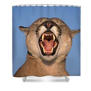 V.hurst Tk21663d, Mountain Lion Growling Shower Curtain by Victoria Hurst