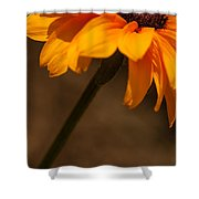 Vibrant Black Eye Shower Curtain