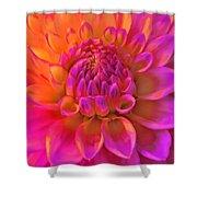 Vibrant Dahlia Flower Shower Curtain