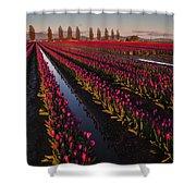 Vibrant Dusk Tulips Shower Curtain