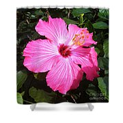 Vibrant Pink Hibiscus Shower Curtain