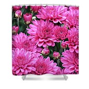 Vibrant Pink Mums Shower Curtain