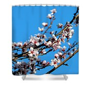 Vibrant Spring Shower Curtain