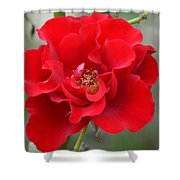 Vibrantly Red Rose Shower Curtain