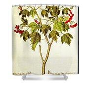 Viburnum Opulus Shower Curtain