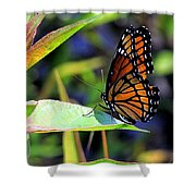 Viceroy 1 Shower Curtain
