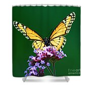 Viceroy Butterfly Square Shower Curtain
