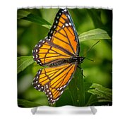 Viceroy Shower Curtain