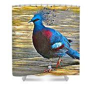 Victoria Crowned Pigeon In San Diego Zoo Safari In Escondido-california Shower Curtain