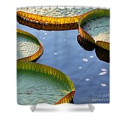Victoria Waterlilies Shower Curtain