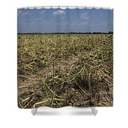 Vidalia Georgia Onion Fields Shower Curtain