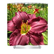 Viette's Daylily. Dark Purple 01 Shower Curtain