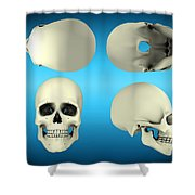 View Of Human Skull From Different Shower Curtain