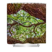 View Through Angel Oak Tree Shower Curtain