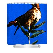 Vigilant Hawk Shower Curtain