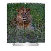 Vigilant Lion Shower Curtain