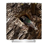 Viloet Winged Swallow-signed-#9682 Shower Curtain