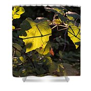 Vine Leaves At Sunset Shower Curtain