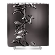 Vine On Iron Shower Curtain by Bob Orsillo