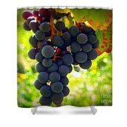 Vine Purple Grapes  Shower Curtain