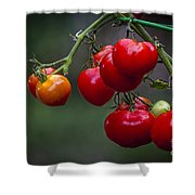 Vine Ripe Goodies  Shower Curtain by Marvin Spates