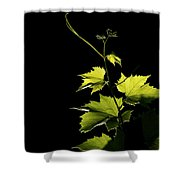 Vine Risisng Shower Curtain
