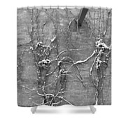 Vines After Snow In Black And White Shower Curtain