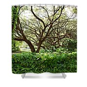 Vines And Oaks Shower Curtain