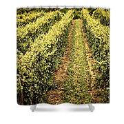 Vines Growing In Vineyard Shower Curtain