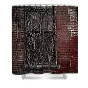 Vines Of Decay Shower Curtain