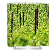 Vineyard 24056 Shower Curtain