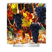 Vineyard 8 Shower Curtain
