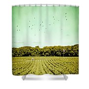 Vineyard Shower Curtain by Colleen Kammerer