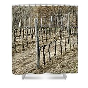Vineyard In Early Spring Shower Curtain