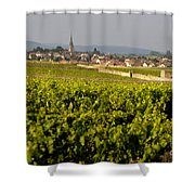 Vineyard In Front Of The Village Of Meursault. Burgundy Wine Road. Cote D'or.burgundy. France. Europ Shower Curtain