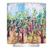 Vineyard In The Afternoon Sun Shower Curtain