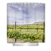 Vineyard Landscape In Maryhill Washington State Shower Curtain