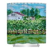 Vineyard Of Ontario 2 Shower Curtain