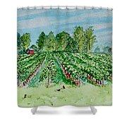 Vineyard Of Ontario Canada 1 Shower Curtain