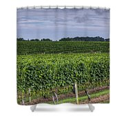 Vineyard Rows Shower Curtain