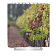 Vineyard View Shower Curtain
