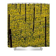 Vineyards Full Of Mustard Grass Shower Curtain