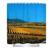 Vineyards In Autumn, Valais Canton Shower Curtain